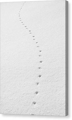 Delicate Tracks In The Snow Canvas Print