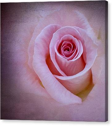 Delicately Pink Canvas Print by Ivelina G