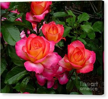 Delicious Summer Roses Canvas Print by Richard Donin