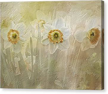 Delightful Daffodils Canvas Print by Diane Schuster