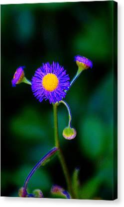 Delightful Flower Canvas Print