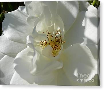 Delightful Gentility Canvas Print by Anat Gerards