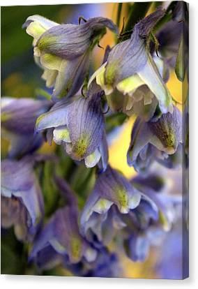 Delphinium Blue Canvas Print