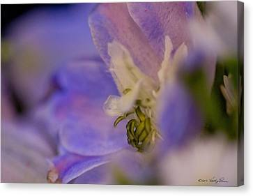 Canvas Print featuring the photograph Delphinium by Kathy Ponce