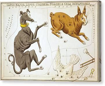 Delphinus Sagitta Aquila And Antinous Canvas Print