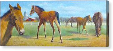 Delval Horse Farm In Spring Canvas Print by Oz Freedgood