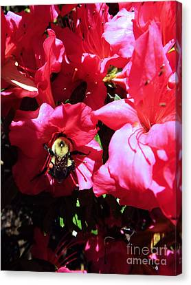 Canvas Print featuring the photograph Delving Into Sweetness by Robyn King