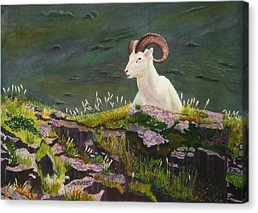 Denali Dall Sheep Canvas Print by Mike Robles