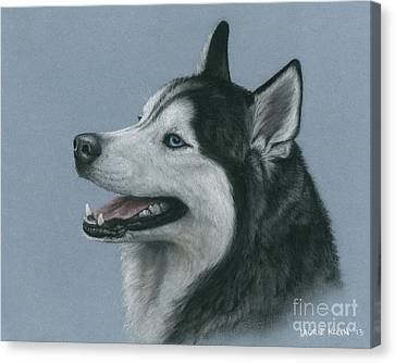 Huskies Canvas Print - Denali by Laurie Klein