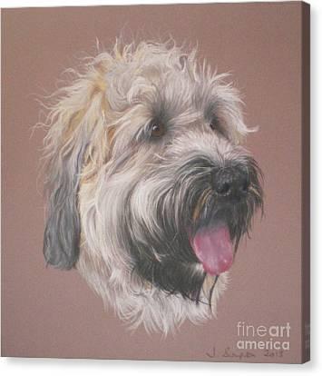 Dennis - Wheaten Terrier Canvas Print by Joanne Simpson