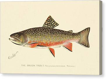 Denton Brook Trout Canvas Print by Gary Grayson