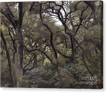 Descanso Oaks 3 Canvas Print