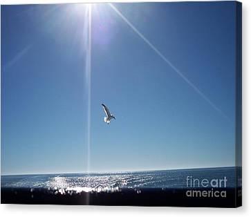 Descending Gull Canvas Print