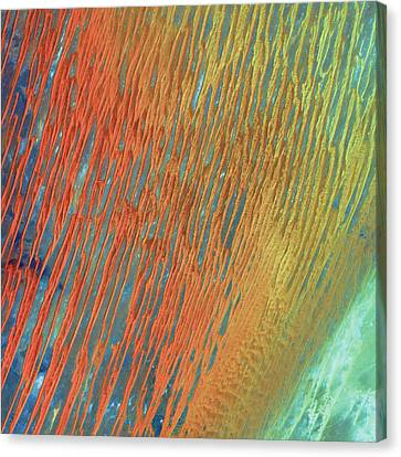 Desert Abstract Canvas Print by Jennifer Rondinelli Reilly - Fine Art Photography