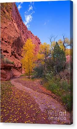 Desert Autumn Canvas Print by Mike  Dawson