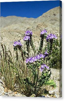 Desert Blooms Canvas Print