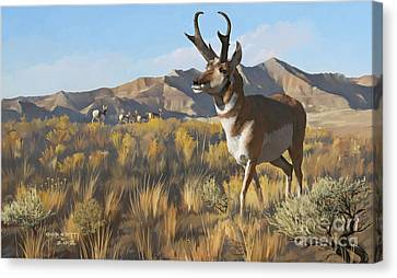 Desert Buck Canvas Print
