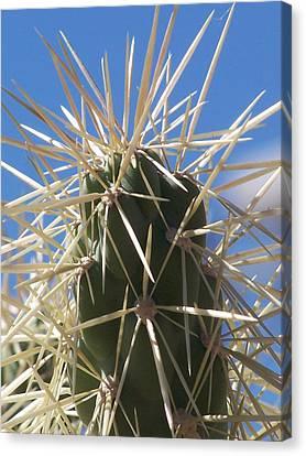 Desert Cactus Canvas Print by Jewels Blake Hamrick
