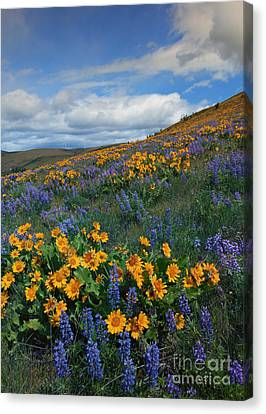 Desert Color Canvas Print by Mike  Dawson