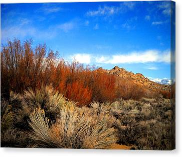 Canvas Print featuring the photograph Desert Colors by Marilyn Diaz