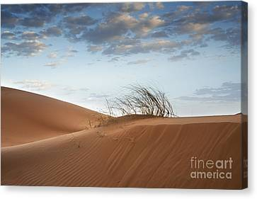 Desert Detail Canvas Print