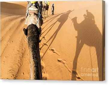 Camel Canvas Print - Desert Excursion by Yuri Santin