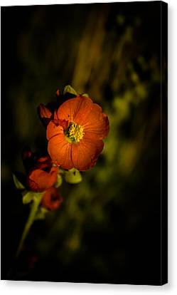 Canvas Print featuring the photograph Desert Flower 2 by Joel Loftus