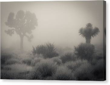Desert Fog / No Watermark Canvas Print by Diana Shay Diehl