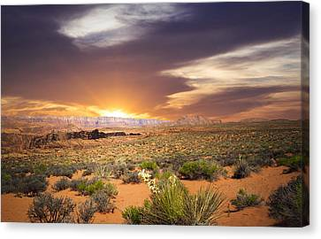 Baja California Canvas Print - An Evening In The Desert by Aged Pixel