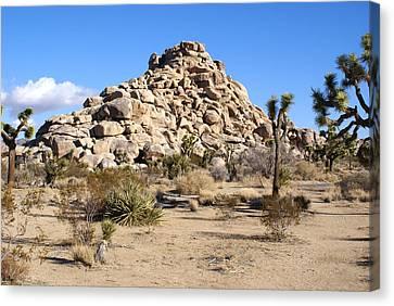Desert Mound Canvas Print by Barbara Snyder