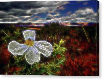 Desert Primrose 1 Canvas Print by William Horden