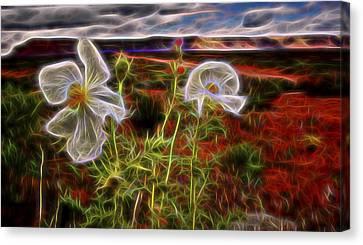 Desert Primrose 2 Canvas Print by William Horden
