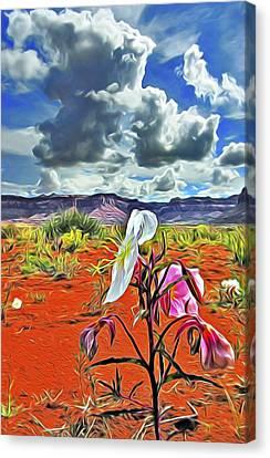 Desert Primrose 3 Canvas Print by William Horden