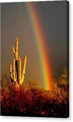 Desert Rainbow Canvas Print by T C Brown