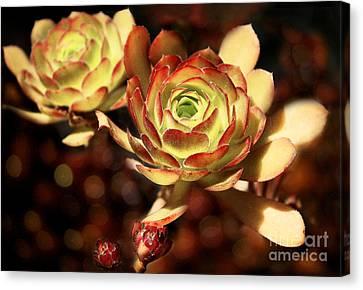 Desert Roses Canvas Print by Ellen Cotton