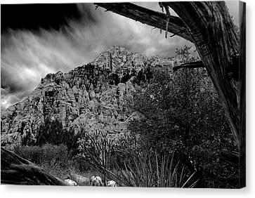 Canvas Print featuring the photograph Desert Slendor by Chris McKenna
