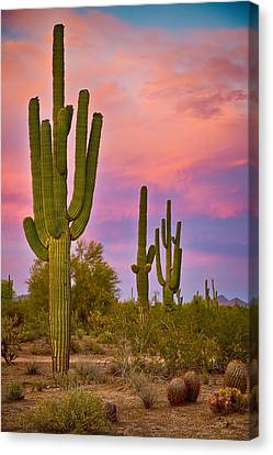 Desert Spring Canvas Print by James BO  Insogna