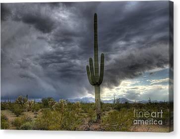 Desert Storm Arizona 1 Canvas Print
