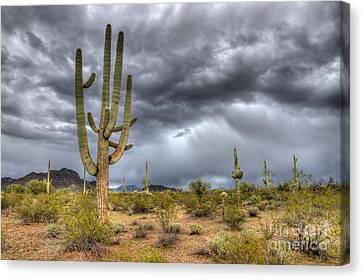Desert Storm Arizona 2 Canvas Print