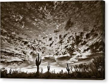 Desert Sunset Canvas Print by Christine Hauber