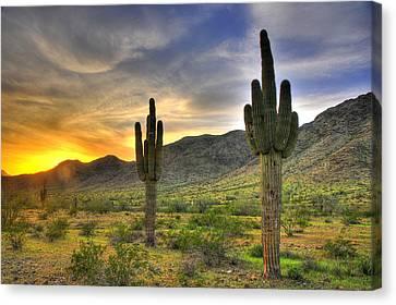 Desert Sunset Canvas Print by Dan Myers