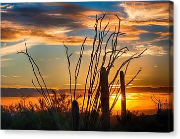 Desert Sunset Canvas Print by Fred Larson