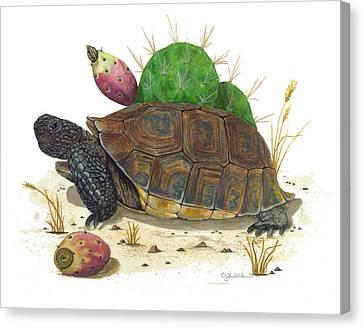 Desert Tortoise Canvas Print by Cindy Hitchcock