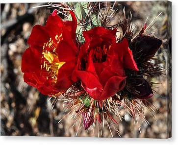 Desert Wildflowers Canvas Print by Diane Lent