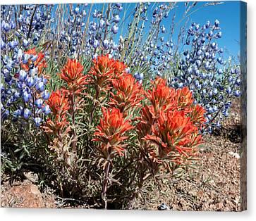 Desert Wildflowers Canvas Print
