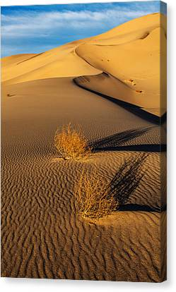 Desolate Perfection  Canvas Print
