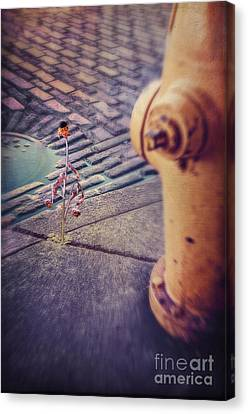 Desperate For Water Canvas Print by Danilo Piccioni
