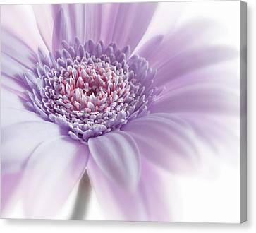 Close Up White Pink Flowers Macro Photography Art Canvas Print by Artecco Fine Art Photography