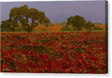 Detail Autumn Vineyard Santa Ynez California  Canvas Print by Barbara Snyder