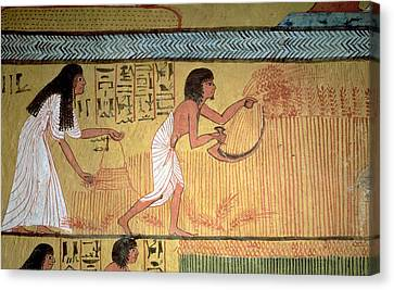 Field Of Crops Canvas Print - Detail Of A Harvest Scene On The East Wall, From The Tomb Of Sennedjem, The Workers Village, New by Egyptian 19th Dynasty